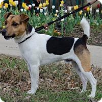 Adopt A Pet :: Cajun in Dallas ADOPT PENDING - Dallas/Ft. Worth, TX