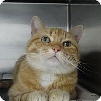 Adopt A Pet :: Kitt - Elyria, OH