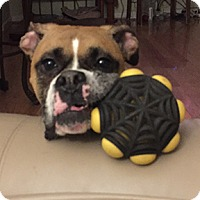 Adopt A Pet :: Tator - Wilmington, NC