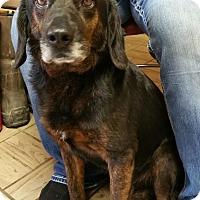 Adopt A Pet :: Willie - Lisbon, OH