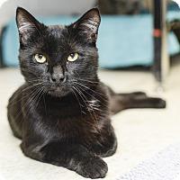 Adopt A Pet :: Oscar - Whitehall, PA