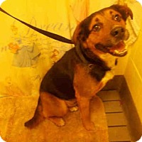 Adopt A Pet :: SCRUFFY - Upper Marlboro, MD