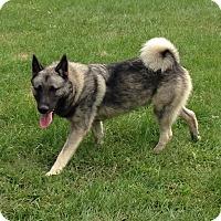 Adopt A Pet :: Balto - Crystal Lake, IL