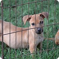 Adopt A Pet :: Dory - Wilminton, DE