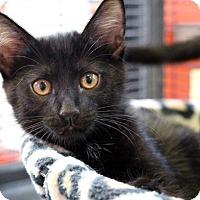 Adopt A Pet :: Snowy - Sarasota, FL