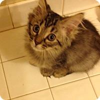 Adopt A Pet :: Ava - Fowlerville, MI