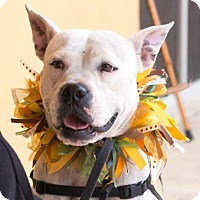Adopt A Pet :: Gouda - Titusville, FL