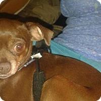 Adopt A Pet :: Maggie - Mankato, MN