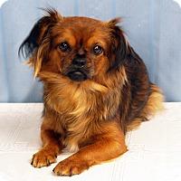Adopt A Pet :: Ruby - Maynardville, TN
