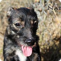 Adopt A Pet :: Nala - Texarkana, AR