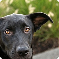 Adopt A Pet :: Lennon - Portland, OR