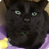 Adopt A Pet :: Money - Ogden, UT
