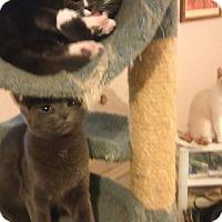 Adopt A Pet :: River n Phoenix - Glen cove, NY