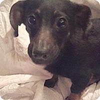 Adopt A Pet :: Bert in Texarkana, TX - Texarkana, TX