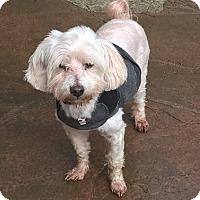 Adopt A Pet :: Coconut - Aqua Dulce, CA