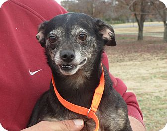 Terrier (Unknown Type, Small) Mix Dog for adoption in Salem, New Hampshire - Ester