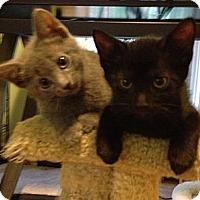 Adopt A Pet :: Keenan - Monroe, GA