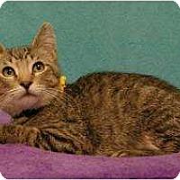Adopt A Pet :: Curley - Sacramento, CA