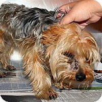 Adopt A Pet :: Baxter - Bemidji, MN