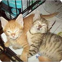 Adopt A Pet :: LOOKIN 4 2 - Little Neck, NY