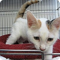 Adopt A Pet :: Jade - Mobile, AL