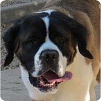 Adopt A Pet :: Bix - Glendale, AZ
