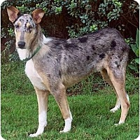 Adopt A Pet :: Nollie - Special Needs - San Diego, CA