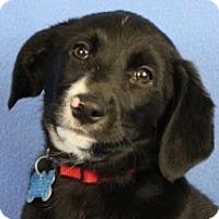 Adopt A Pet :: Josey - Minneapolis, MN