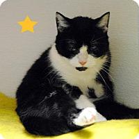 Adopt A Pet :: Bun Bun 11221 - Atlanta, GA
