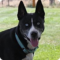 Adopt A Pet :: Koda - Video! - Bend, OR