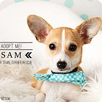 Adopt A Pet :: Sam-pending adoption - Omaha, NE