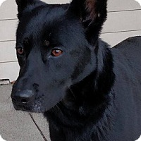 Adopt A Pet :: Onyx - Quincy, IN