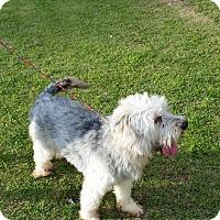 Adopt A Pet :: SHADOW (SRC#1787)  IN NC - Lenoir, NC