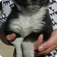 Adopt A Pet :: ANDREA - Corona, CA