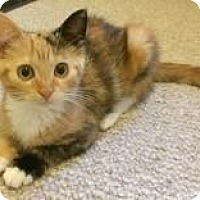 Adopt A Pet :: Martha - East Brunswick, NJ