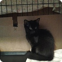 Adopt A Pet :: Stephie - Middletown, CT