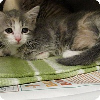 Adopt A Pet :: Whisper - Windsor, VA