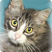 Adopt A Pet :: Mrs. Potts - Benton, AR