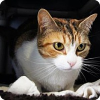 Adopt A Pet :: Eevee - New Milford, CT