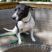 Adopt A Pet :: Jazz - Jacksonville Beach, FL