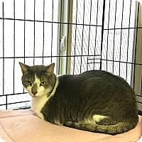 Adopt A Pet :: Talia - Plainville, MA