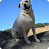 Adopt A Pet :: Tank - Mountain Center, CA