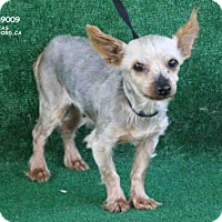 Adopt A Pet :: A089009 - Hanford, CA