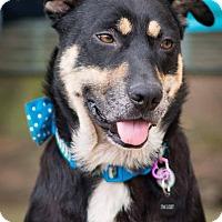 Adopt A Pet :: Maeve - Seattle, WA
