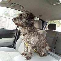 Adopt A Pet :: Benny - McKinney, TX