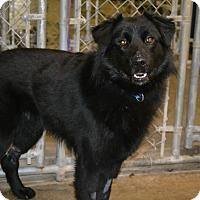 Adopt A Pet :: Von - East Smithfield, PA