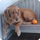 Adopt A Pet :: Kala