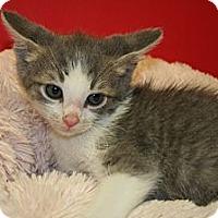 Adopt A Pet :: BAXTER - SILVER SPRING, MD