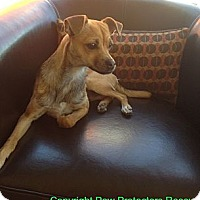 Adopt A Pet :: Cody - Oceanside, CA