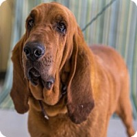 Adopt A Pet :: Sara Beth-URGENT - Providence, RI